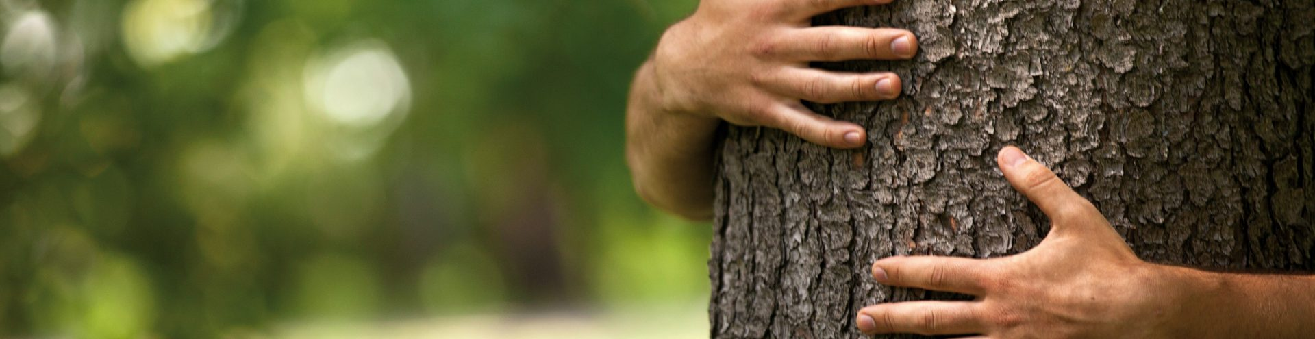 Kwaliteitslabel groen - Circulair groen - Bomen verplanten