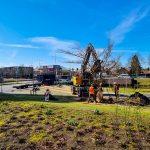 Cornus wordt opnieuw geplant